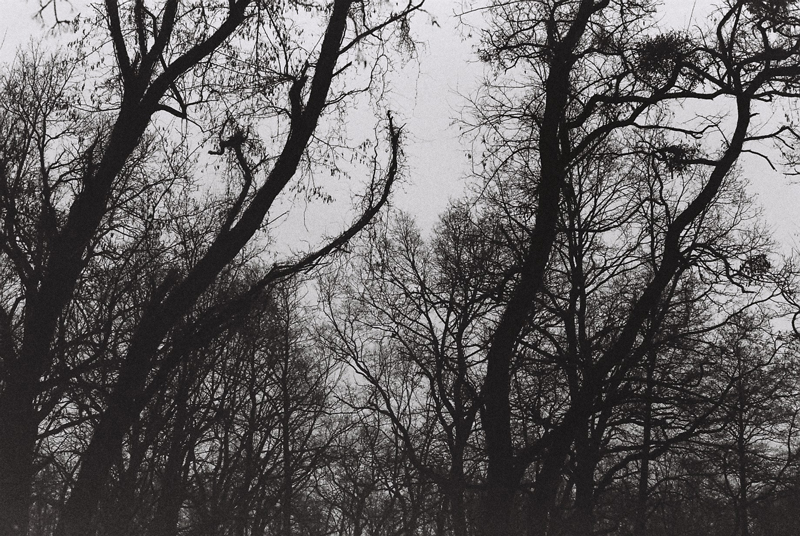 scale-trees-dark-claws-in-the-sky-baruth-black-and-white