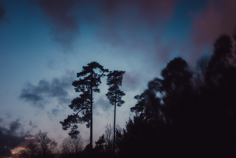 Festbrennweite-Winter-Himmel-Bäume-Sonnenuntergang